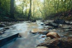 一条风雨如磐的河在一个山森林里在春天 自然的构成 免版税图库摄影