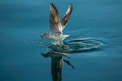 一条鱼一只海鸥 免版税库存图片