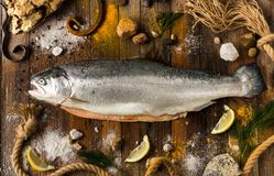 一条鲜鱼三文鱼在灰色委员会说谎 在海小卵石附近 免版税库存图片