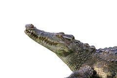 一条鳄鱼的图象在白色背景的 库存照片