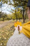 一条黄色围巾的女孩有槭树的在她的手离开在秋天公园 免版税库存图片