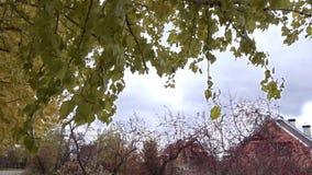 黄色秋天树 股票视频