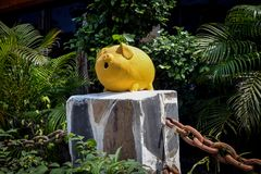 一条黄貂鱼的黄色塑料存钱罐在密林 免版税库存图片