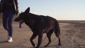 一条黑德国牧羊犬狗由她的沿路的女主人大师前进通过海滩的摄影师在 股票视频
