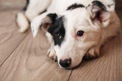 一条黑白狗等待他的所有者 无家可归的动物的问题 免版税库存图片