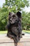 一条黑蓬松狗在大阳台等待 免版税库存图片