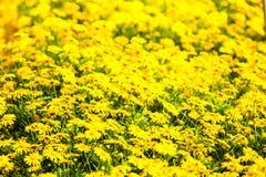 一条黄色花毯子 免版税库存图片