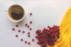 一杯咖啡、分支与叶子,荚莲属的植物红色莓果和黄色编织了毛线衣在白色背景 猬 免版税库存图片