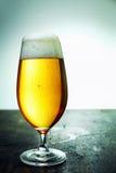 一杯新鲜的泡沫似的啤酒,特写镜头 库存图片