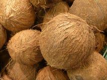 一枚整个未加工的椰树坚果的细节 库存图片
