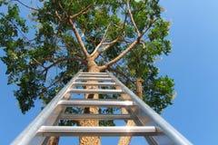 一架梯子反对一棵大高大的树木 免版税库存图片
