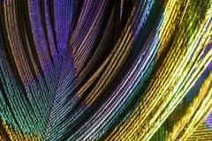 一根五颜六色的孔雀羽毛的极端宏观照片 图库摄影