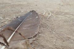 一根偏僻的羽毛 图库摄影