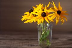一根大丁草的黄色花在玻璃的 图库摄影