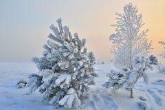 一根小积雪的冷杉木 免版税库存图片