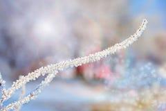 一根枝杈的宏指令有雪的 库存照片