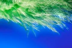 一根绿色羽毛的抽象背景在一个蓝色背景宏指令的 免版税库存图片