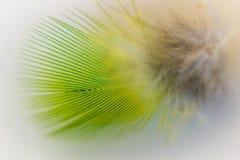 一根绿色长尾小鹦鹉羽毛的宏指令 免版税库存图片