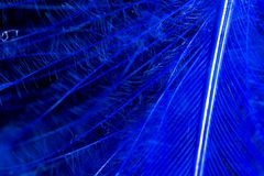 一根蓝色羽毛作为抽象背景 免版税库存图片