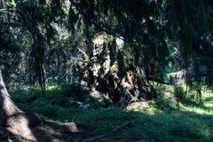一根阴沉的树干 库存照片