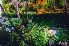 一桃红色在有绿色植物的夜庭院里上升了 免版税库存图片