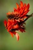一梯沽的红色花 库存图片