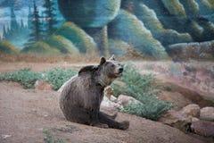 一棕熊坐 免版税图库摄影