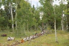 一棵下落的树在沙漠 库存图片
