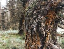 一棵不可思议的树在一个美丽的森林里 图库摄影