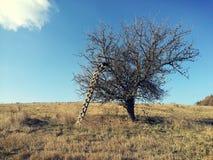 一棵不穿衣服的树 库存照片