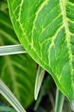 一棵五颜六色的植物在庭院里 库存图片