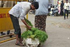 一棵人和菜在Bengaluru班格洛,印度 图库摄影