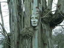一棵人的树 库存照片