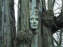 一棵人的树 免版税库存照片