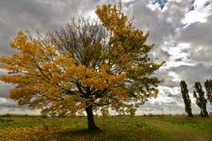 一棵倾斜的树在与剧烈的天空的秋天 库存照片
