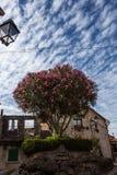 一棵偏僻的树在一阴天 免版税库存图片