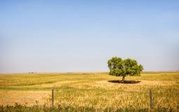 一棵偏僻的树我 蓝色域开花草草甸天空夏天下 免版税库存图片