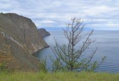 一棵偏僻的树的看法在岩石和湖背景的  免版税库存图片