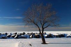 一棵偏僻,光秃的树冻伊利湖 免版税库存图片