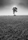 一棵偏僻的树和黑白葱的领域 库存图片