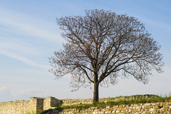 一棵偏僻的树在公园 免版税库存照片