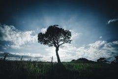 一棵偏僻的树在晚上 免版税库存图片