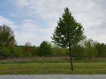 一棵偏僻的树在晚上 免版税库存照片