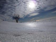 一棵偏僻的树在远处投入太阳和雪 库存图片