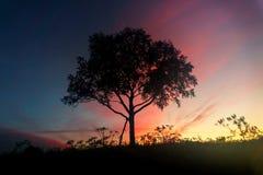 一棵偏僻的树在黎明 库存图片