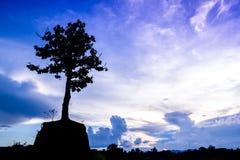 一棵偏僻的树的剪影 免版税库存图片