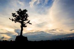 一棵偏僻的树的剪影 库存图片