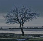 一棵偏僻的树 免版税库存图片