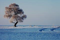 一棵偏僻的霜树 库存图片