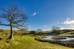 一棵光秃的落叶树在小河旁边的冬天 免版税库存照片